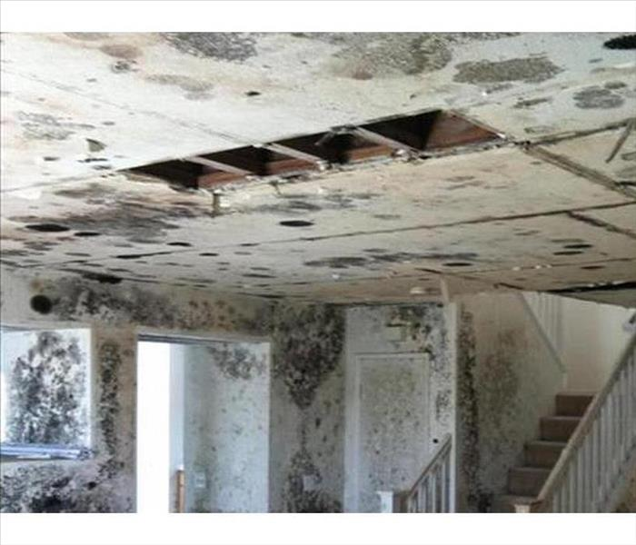 Devastating Mold Infestation in Charleston