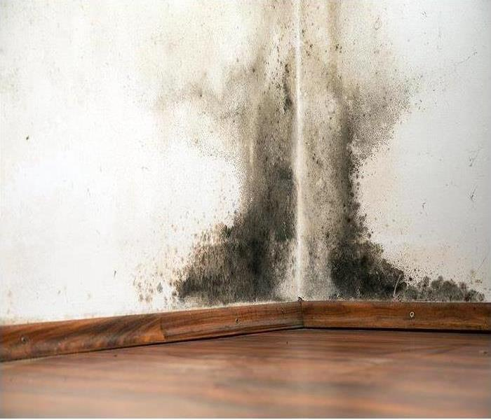 Mold Remediation Is Laboratory Testing Of Mold Damage Found In My Wildwood Lake Home Necessary?