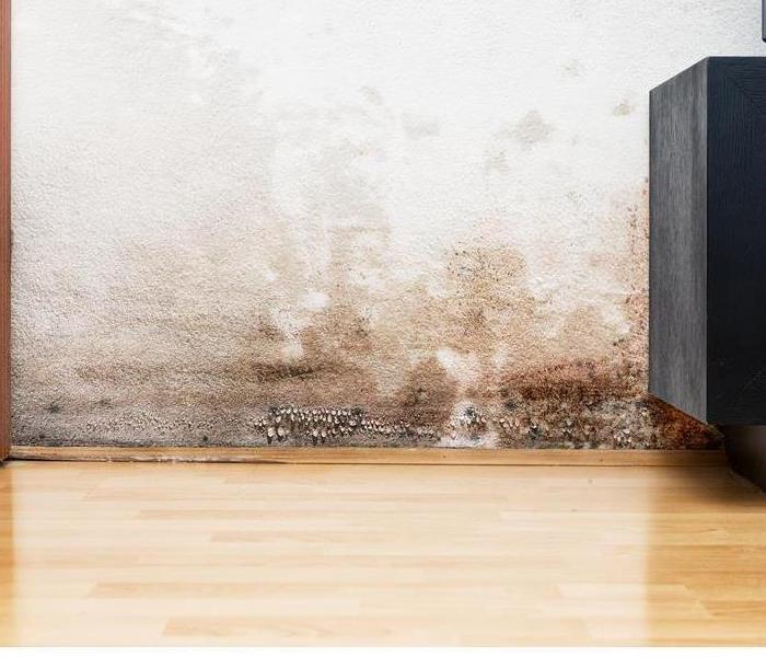 Mold Remediation 3 Fast FAQs About Mold